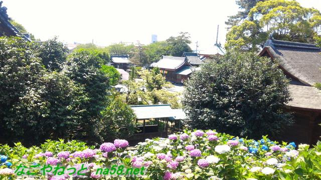 愛知県稲沢市性海寺あじさいまつり・古墳の上からの風景