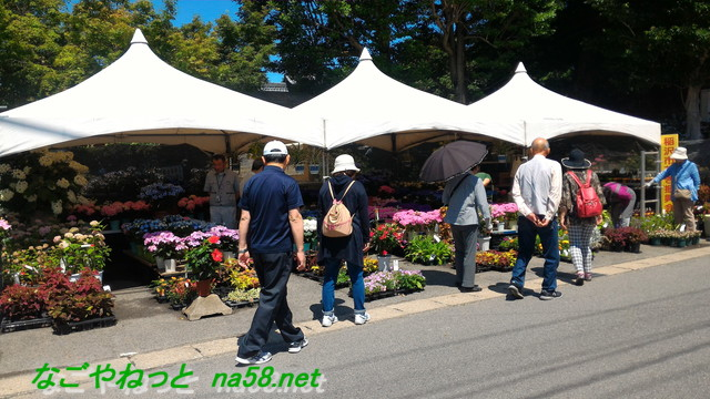 愛知県稲沢市性海寺あじさいまつり・門右側の鉢花などの販売