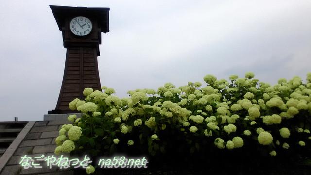 市の花はあじさい・岐阜県美濃加茂市のあじさいの見どころ中山道名古屋から1時間