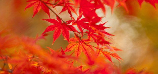 紅葉が素晴らしい岩屋堂公園!散策デートにバッチリ・設備に満足(愛知県瀬戸市)