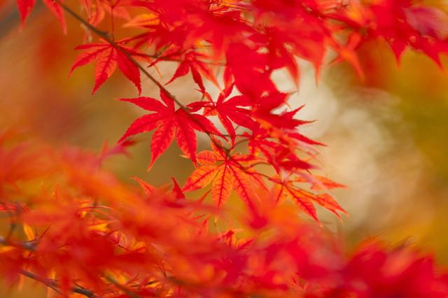 美しく素晴らしい紅葉