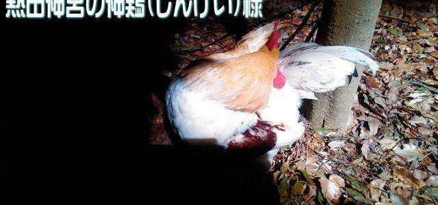 熱田神宮の神鶏(しんけい)様はここに!酉年の幸運を