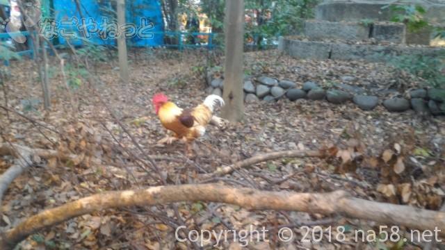 熱田神宮境で神鶏様に会う