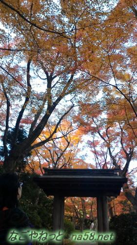熱海MOA美術館リニューアルオープン後茶の庭の秋