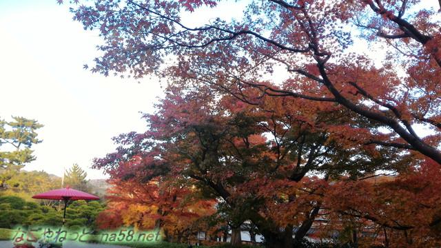 熱海MOA美術館の日本庭園の紅葉