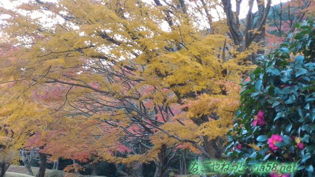 道の駅天城越えの紅葉ピークの11月の様子