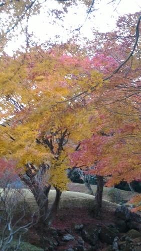 道の駅天城越えの紅葉11月の様子