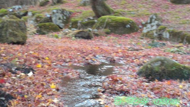 道の駅天城越えの紅葉11月流れる小川