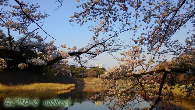 名古屋城と満開のソメイヨシノ、東側お堀の外側から