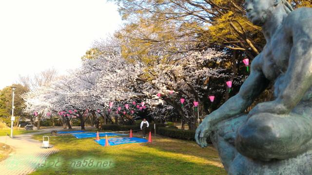 名城公園お花見席付近の満開のソメイヨシノ