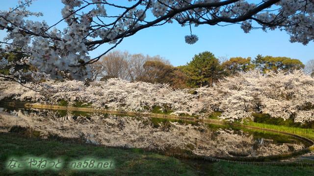 名城公園の池にうつる満開のソメイヨシノ