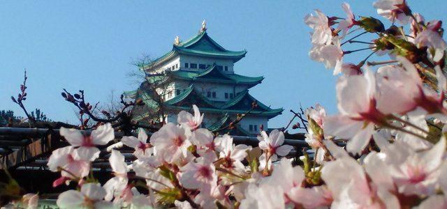 名古屋城満開の桜・絶景スポットでとってきました(2018年3月下旬)