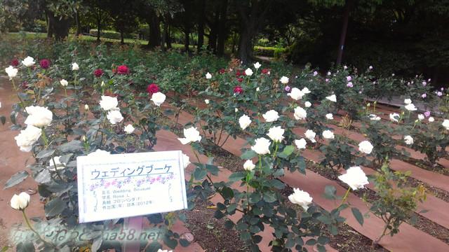 名古屋市西区庄内緑地公園のバラ園5月ウエディングブーケ