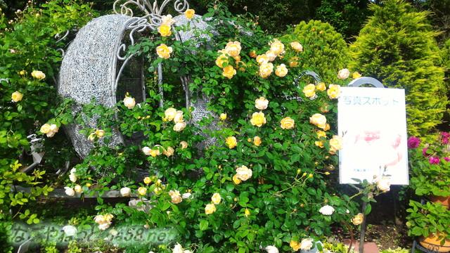 名城公園のバラ園(名古屋市中区)撮影スポット
