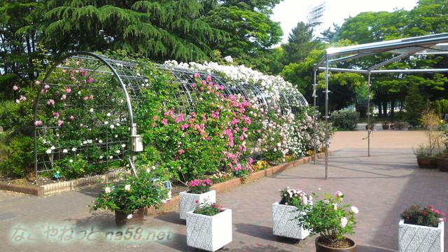 名城公園のバラ園(名古屋市中区)バラのゲート