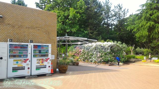 名城公園のフラワープラザの前の自販機と、バラのゲート