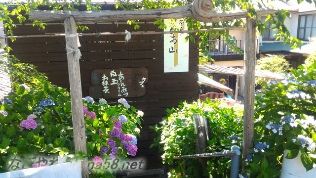 犀川堤のあじさい街道のあじさいとカフェ(岐阜県大垣市墨俣)