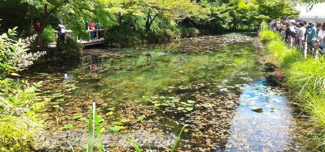 モネの池・スイレン開花時期・時間に合わせて、晴天の6月に(岐阜県関市板取)