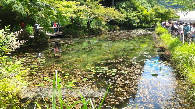 根道神社にある「モネの池」左からの撮影(岐阜県関市板取)