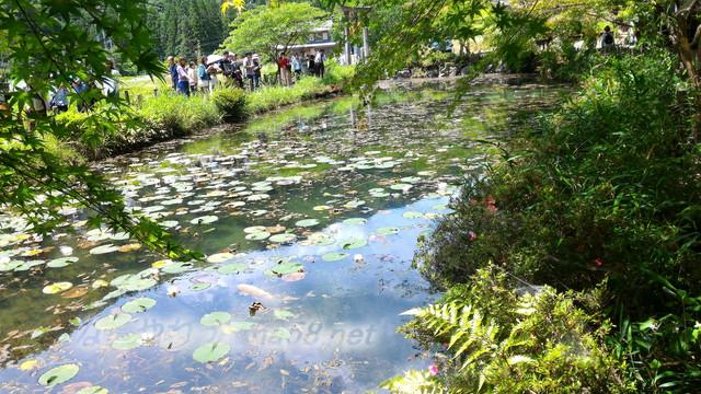 根道神社にある「モネの池」(岐阜県関市板取)