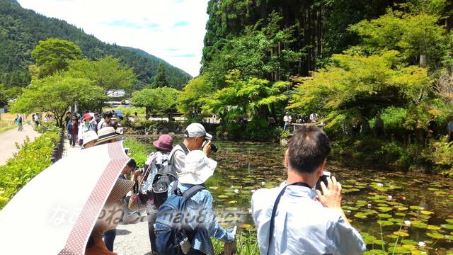 根道神社にある「モネの池」絵画よりきれい写真とりまくり(岐阜県関市板取)