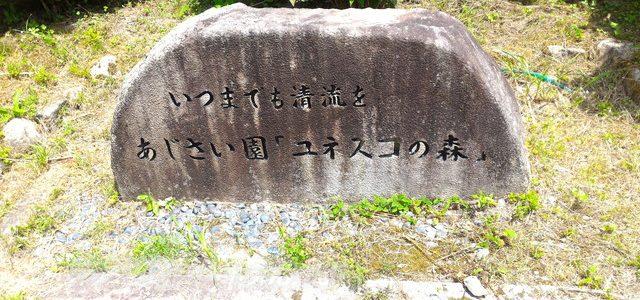 「モネの池」の隣のあじさい園・杉大木とのコントラスト(岐阜県関市)