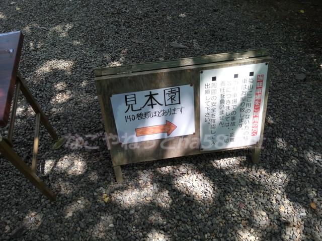 あじさい寺の三光寺(岐阜県山県市)の見本園
