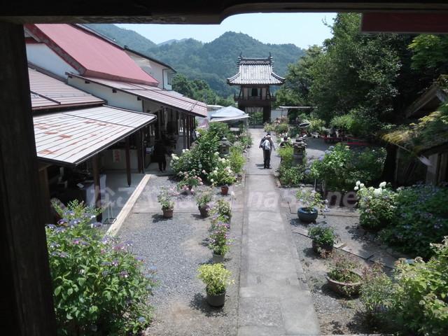 あじさい寺の三光寺(岐阜県山県市)本堂から見下ろした境内
