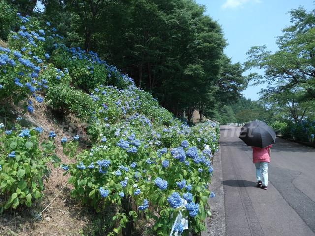21世紀の森公園(岐阜県関市)のぼり坂を歩き始めた