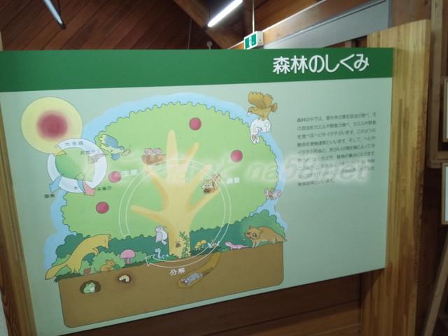 21世紀の森学習展示館・森林のしくみ(岐阜県関市板取)