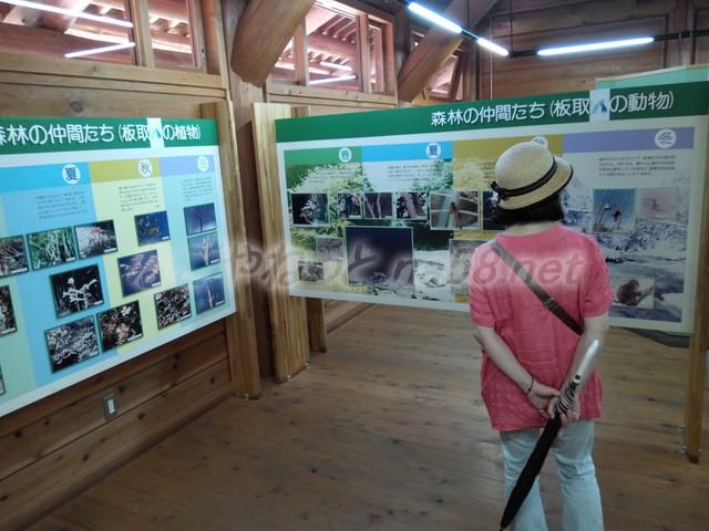 21世紀の森学習展示館・板取の動物と植物(岐阜県関市板取)