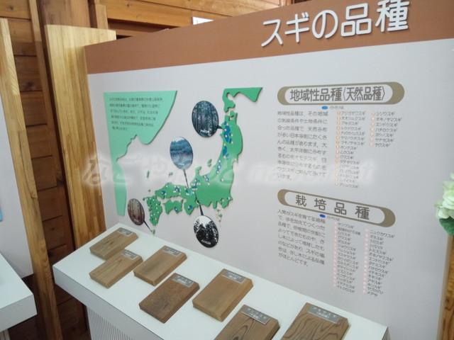 21世紀の森学習展示館・スギの品種(岐阜県関市板取)