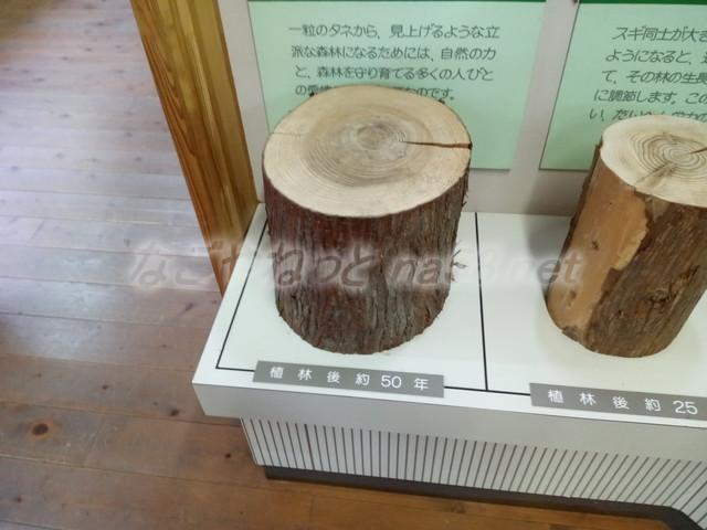 21世紀の森学習展示館・スギの年輪大きさ(岐阜県関市板取)