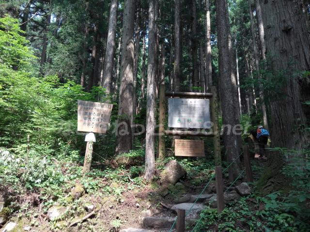 21世紀の森公園(岐阜県関市)の珍しい大株杉とハイキングコース
