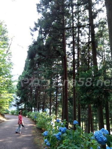 21世紀の森公園(岐阜県関市)杉並木とハイキングコース