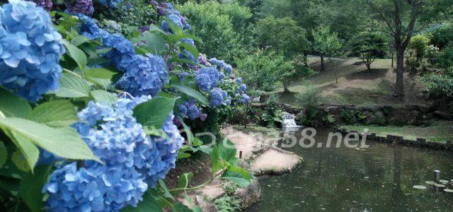 みのかも健康の森・紫陽花と睡蓮の共演が見ごたえあり!スゴかったです!(岐阜県)