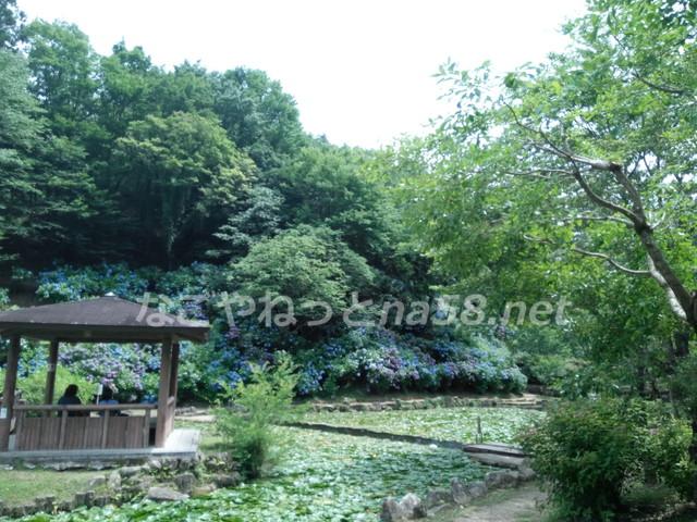 スイレンの池と紫陽花と休憩所です。