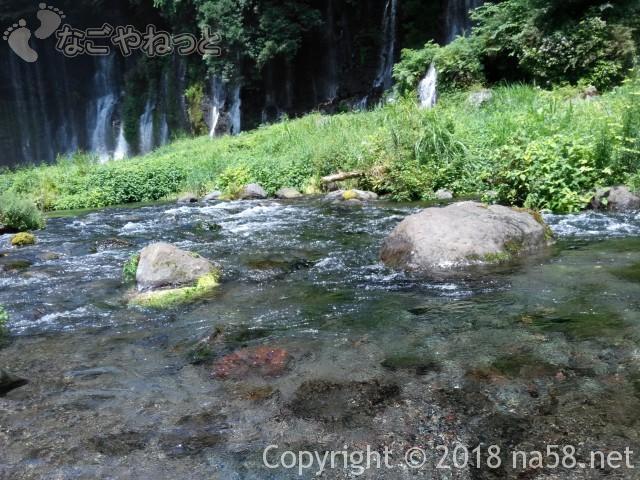 静岡県の富士宮市「白糸の滝」水は冷たい