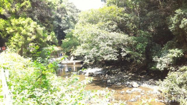 多度天然プール(三重県桑名市)プールに最も近い奥の駐車場からプールに向かって歩く右側風景