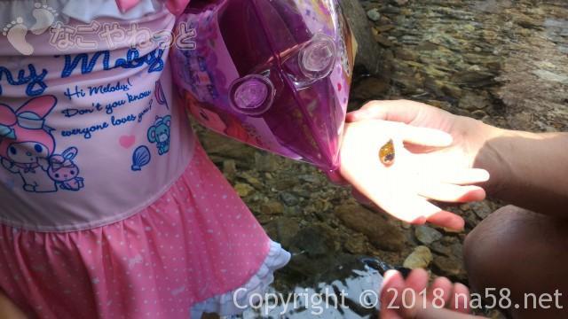 多度天然プール(三重県桑名市)で川遊びタニシ発見