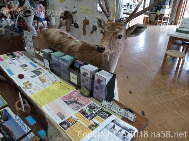 八ヶ岳自然ふれあいセンター(山梨県北杜市)の展示