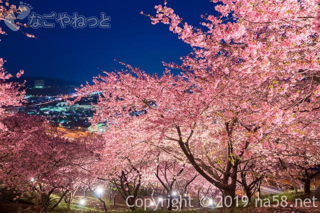 桜の開花予想2019年は?満開も予想できるよ!(1月 東海地方版)夜桜ライトアップ