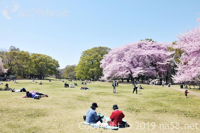 桜の開花予想2019年は?満開も予想できるよ! 東東京の開花予想と満開予想