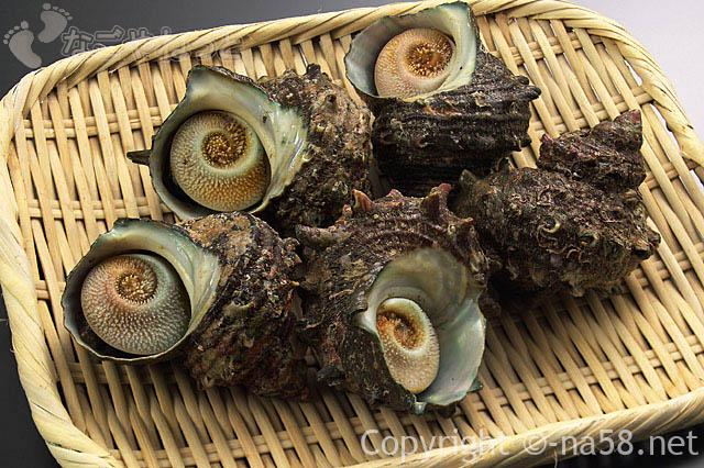 海鮮が食べ放題!名古屋港区で大盤振る舞い?飲み放題も(子供料金あり)サザエの画像
