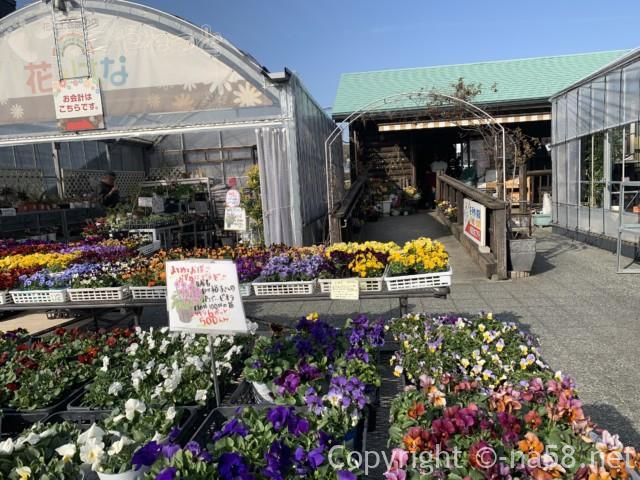 長久手市あぐりん村の花市場