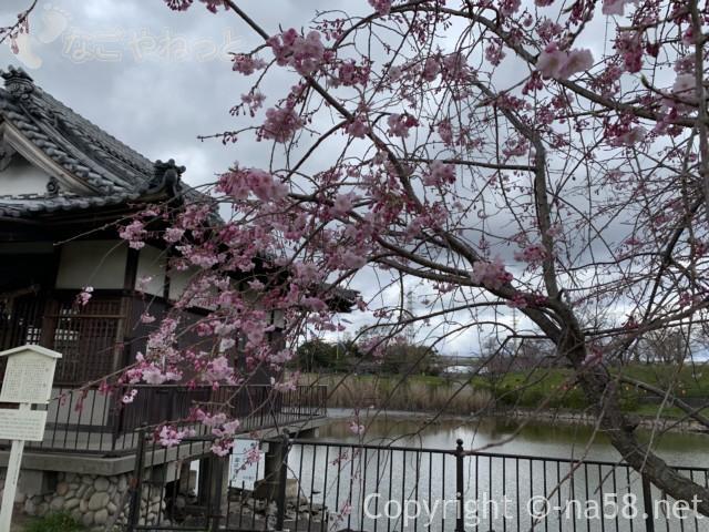 蛇池神社と蛇池、濃いピンク色の桜と