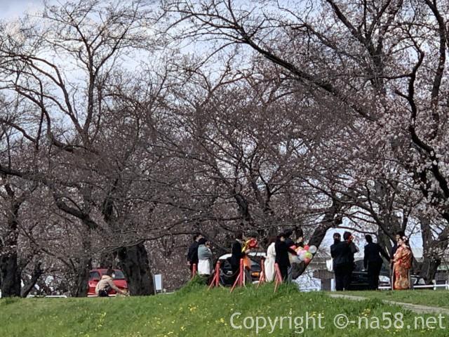 蛇池公園(名古屋市北区西区)洗堰堤の並木沿いで前撮りの花嫁花婿さん