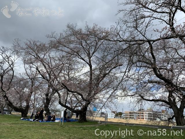 蛇池公園(名古屋市北区西区)桜花見の皆さん