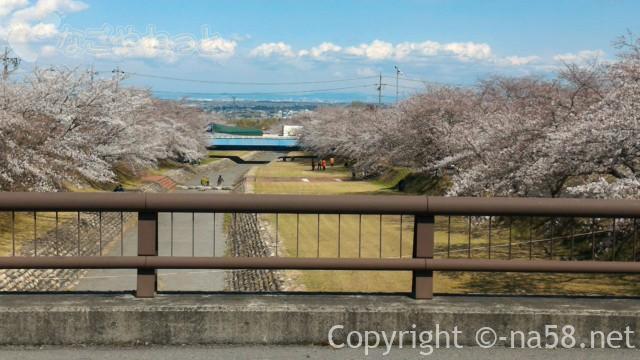 岐阜県羽根谷だんだん公園の橋の上からの桜のトンネル風景