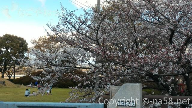 羽根谷だんだん公園(岐阜県海津市南濃町奥条)でお花見をする